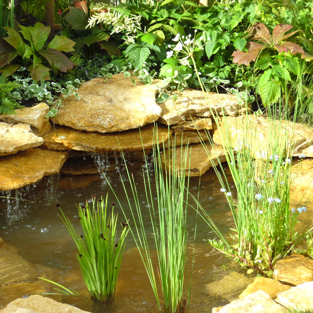 Ornamental pond starter pack 5 square metre pond pond for Ornamental fish pond supplies