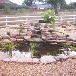 ornamental pond 2 BFL