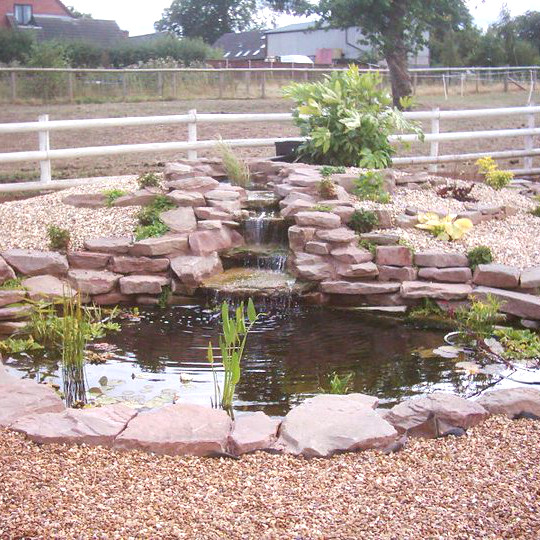 Medium New Pond Starter Pack - Ornamental