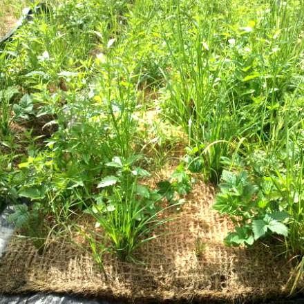 Coir pallets. Pre-established or un-planted.